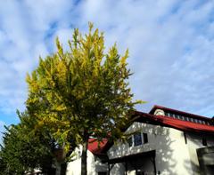 白壁に影を落とす秋