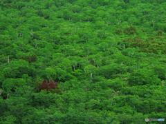 カルデラの密林
