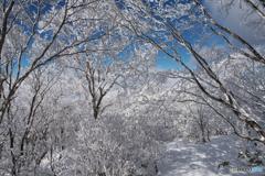 姫神山霧氷Ⅵ