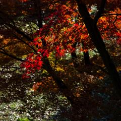 千秋公園 2013秋・Ⅰ