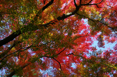 千秋公園 2013秋・Ⅱ