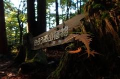 太平登山2014コンデジ撮りⅢ