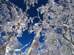 見上げる快冬Ⅱ