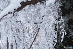 雪を絡めとる