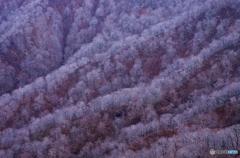 晩秋太平山Ⅱ