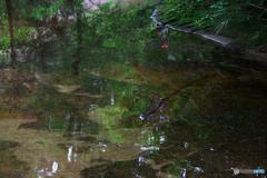 深山の川面