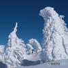 ゴジラ樹氷