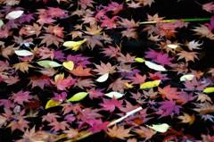 京都・紅葉直指庵の池