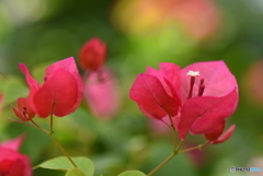 魅力的な花