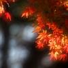 照る紅葉 2