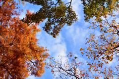 秋・・・空