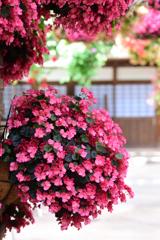 花のある情景