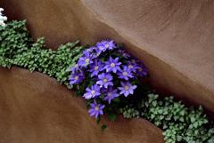 花のある造形