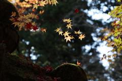 秋深し 室生寺