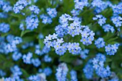 4月の庭花