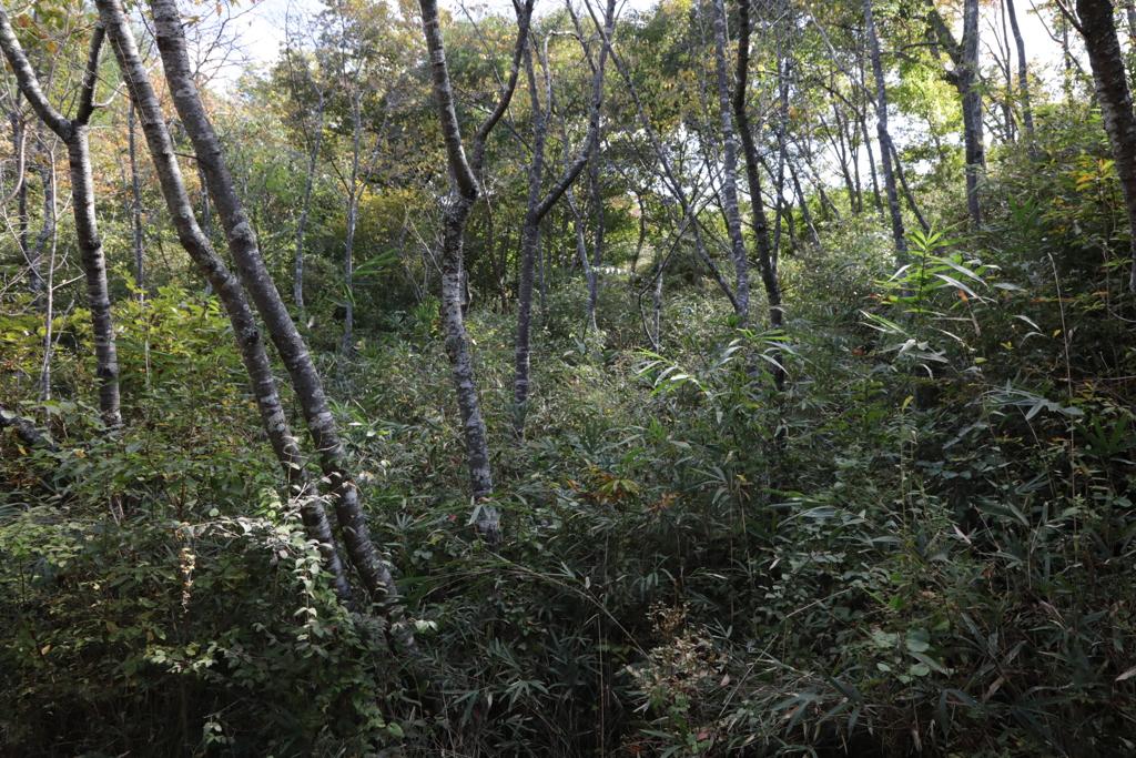木立の散歩道