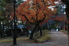 晩秋 奈良公園