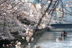 「お江戸深川桜祭り」にて