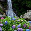 見返りの滝と紫陽花2