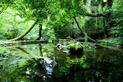森の中の静寂