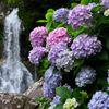 見返りの滝と紫陽花