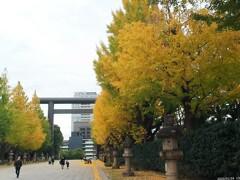表参道の黄葉