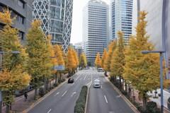 西口通りの銀杏並木