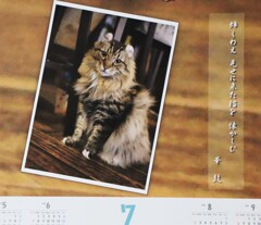 「ディー・カッツェ」オリジナルカレンダー 7月