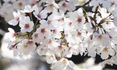 開花がイマイチ