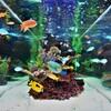 熱帯魚も楽しめます