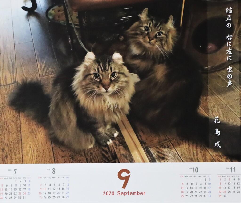 カフェ「ディー・カッツェ」カレンダー9月