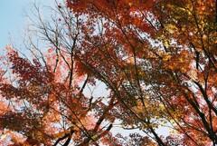 わずかに残る紅葉