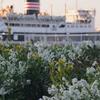 花と氷川丸
