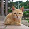 猫島猫20