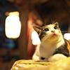 神社猫97