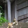 猫島猫14
