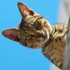 南の島猫20