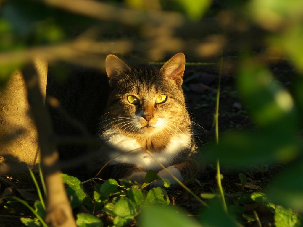公園猫116