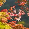 布引きの滝 紅葉