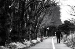 海軍道路の朝 - 冬の桜並木