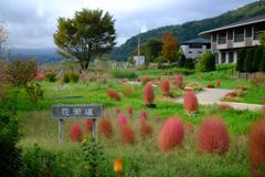 大石公園の花街道