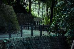 四季の森公園 冬の緑