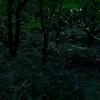 四季の森公園の蛍