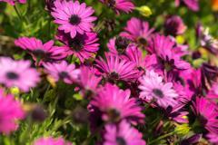 にぎやかに咲く花