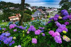 紫陽花が見下ろす町