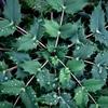 植物実験 #12
