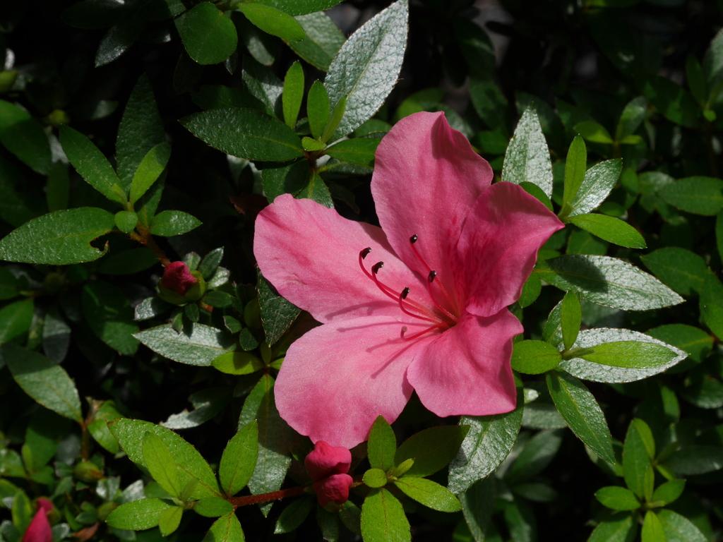庭に咲いた花04