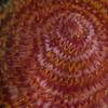 番外編 一輪の花―イバラカンザシ―