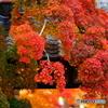 山門と紅葉と