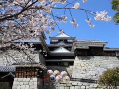 『松山城×桜×和傘』